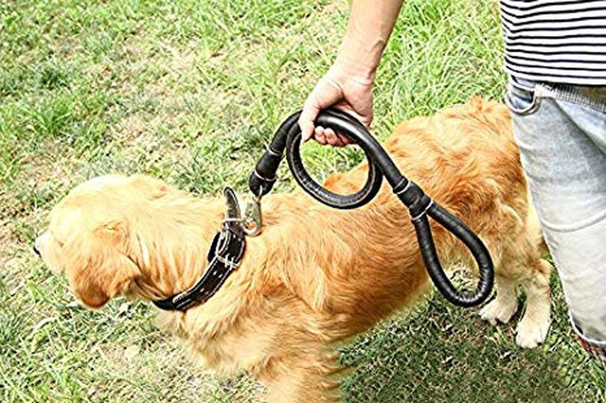 ماجرای حمله ۳ سگ به ۲ کودک در پارک