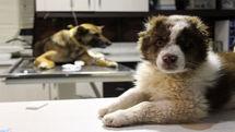 شرایط زندگی حیوانات بی خانمان شهری را ببنید/ اثری اپیزودیک