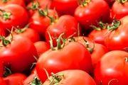 کاهش ۴۰ درصدی قیمت گوجه فرنگی در بازار