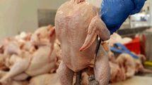 کمپین مردمی، مرغ وحشی را به دام می اندازد؟!
