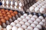 تخم مرغ همچنان بر فراز آسمان
