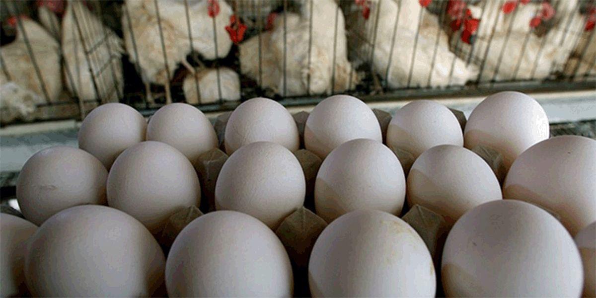 قیمت مرغ و تخممرغ در بازار