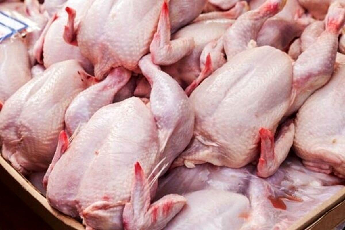 واردات تخممرغ نطفهدار و مرغ منجمد برای استمرار آرامش